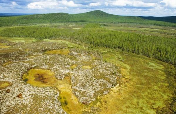 퉁구스카 충돌 이후 황폐해졌던 삼림이 100여년이 지나며 재건되고 있다. [ATI]